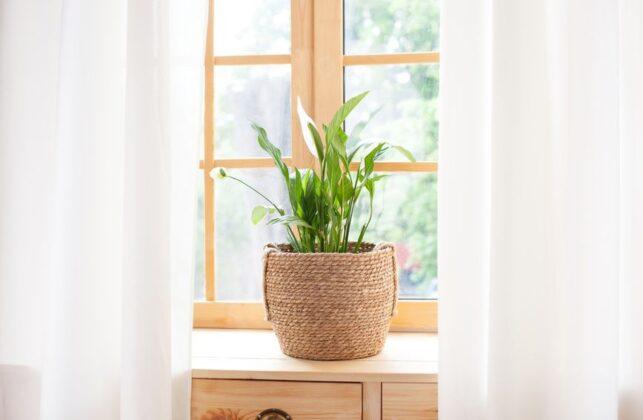 Ženska sreća: Čistilica zraka koja u dom donosi zdravlje i ljubav