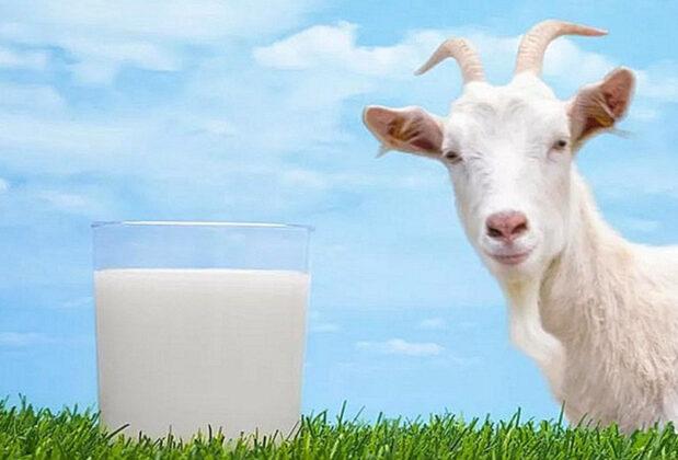 Na molekularnom nivou kozje mlijeko slično ljudskom